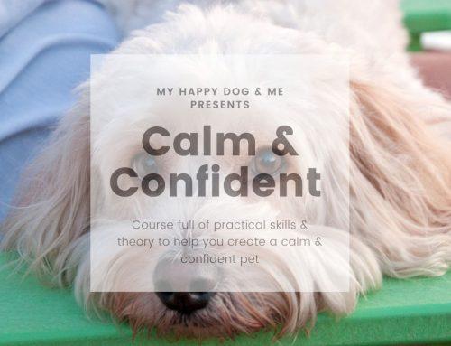 My Happy Puppy Club – Calm & Confident (Pre School 8-16 weeks)