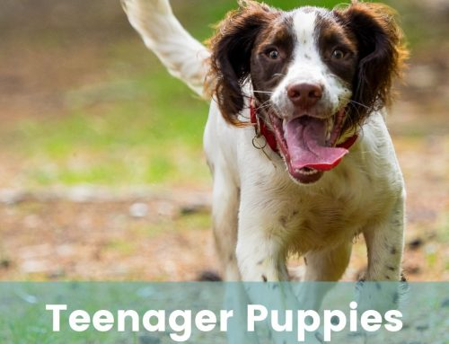 My Happy Puppy Club – FUNdamentals Tenacious Teenagers (6-18 months old)