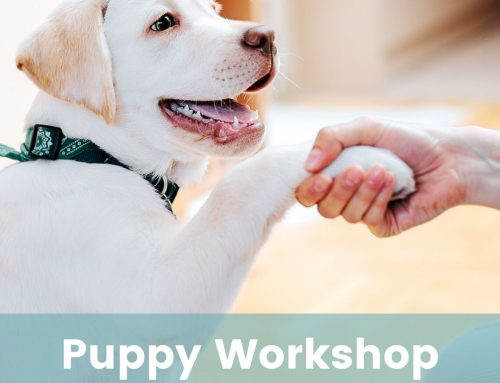 My Happy Puppy – Themed Workshops