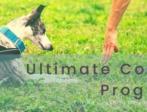 FUNdamentals Ultimate Coaching Programme