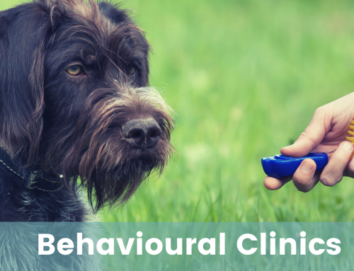 Behavioural Clinic – Mixed ages & abilities