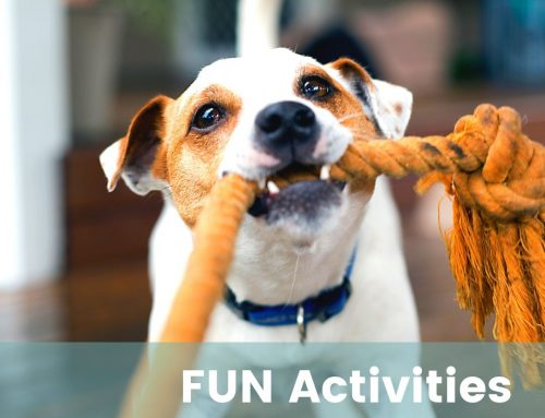FUNactivities – Mixed ages & abilities